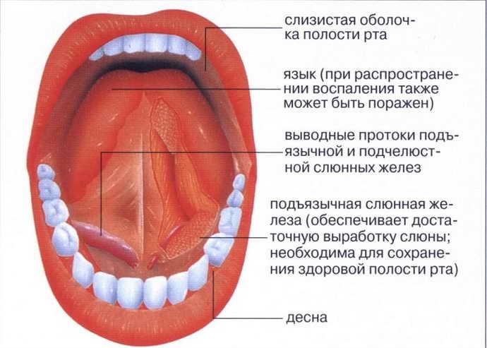 Локализация болит под языком