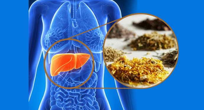 заболевания печени и зеленый язык