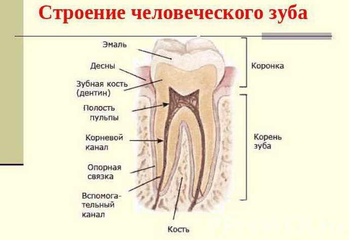 Особенности лечения зуба под пломбой