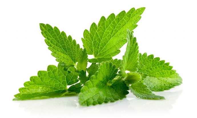 снизить болевые ощущения помогут свежие мятные листочки